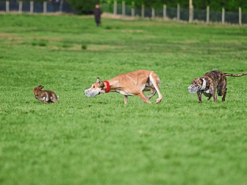 Clonmel coursing derby betting matched betting finder