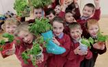 Tipperary Primary Schools now invited to apply for free GIY & innocent BIG GROW Pack