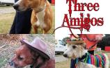 The 'three amigos' at Mo Chara are looking for forever homes
