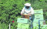 North Tipperary Beekeepers Association set to hold a beginners course this year
