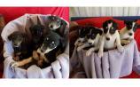 Mo Chara: Puppies galore at Mo Chara