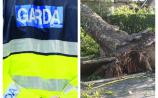 Emergency services at scene of fallen tree on Tipperary road
