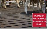 Easyfix leading the way in livestock comfort market