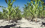 Crop losses inevitable - weather will impact yields