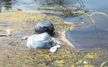 Shameful dumping of domestic rubbish in River Suir at Clonmel