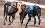 Fifi was a match for Jasper and Patch at Thurles