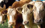 Tipperary farming: Beef comments welcomed, but support still required