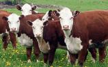 Tipperary farming: Minister urged to renew Beef Finisher Payment for 2021
