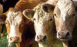 Tipperary farmers urged to apply for €8bn Covid-19 fund