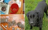 Gardaí seize €3,600 worth of suspected drugs in Roscrea