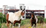 Equestrian art exhibition Cahir