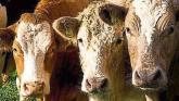 Tipperary farming: ICSA demands fairness under BEAM scheme