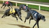 Devilish display in delayed Tipperary Cup at Thurles Greyhound Stadium