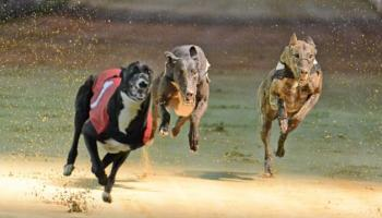Thurles Greyhounds: Boherna best in Kasko kick-off at Thurles