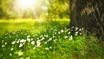 Gardening with James Vaughan: Grass seed or grass turf?