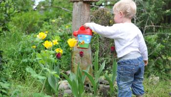 Gardening tips with James Vaughan: Now is the time to get kids out gardening