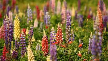 Gardening with James Vaughan: Time to plant perennial flowers