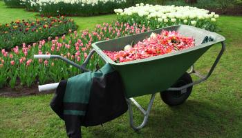 Gardening with James Vaughan: Sort out garden essentials