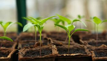 Gardening with James Vaughan: Feed plants to help them thrive