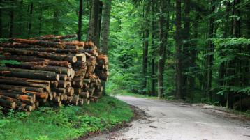 Planting of trees fell to all time low in Tipperary in 2020