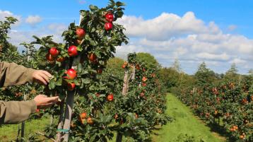 Dates announced for this year's Clonmel Applefest