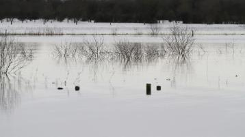 Call for action to tackle flooding on Tipperary's Shannon callows