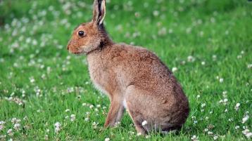 Albert Nolan: A hare's life