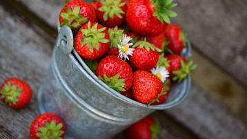 Gardening with James Vaughan: Getting to grips with strawberry plants