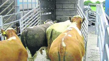 Tipperary farmers advised on best ways to load and unload cattle
