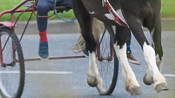 Driver let passenger lean out window to film horse running along Tipperary road