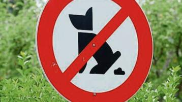 Dog fouling in Thurles needs to stop - Cllr Jim Ryan