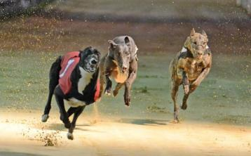 No clowning around for Ringmaster at Thurles greyhound racing