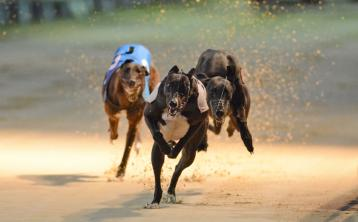 Greyhounds: Cilla sets standard in sizzling Champion semis at Thurles track