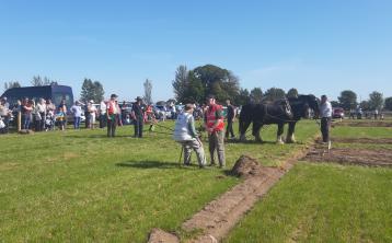Horse Plough class in Fenagh