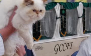 Tipperary's top cats on show this weekend