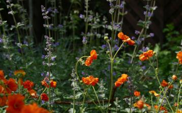 Gardening with James Vaughan: Making the most of our summer days