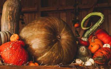 Gingergirl: Versatile and delicious Pumpkin Falafels