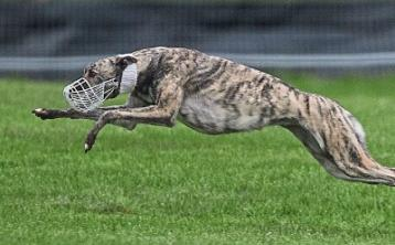 National Coursing Meeting in Tipperary abandoned for first time in over 50 years