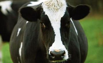 ICMSA says that 'substantial' milk price rise a 'must'