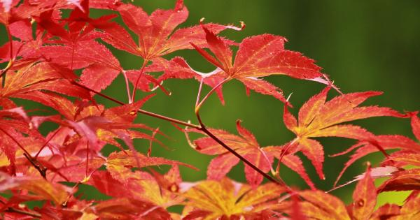 Gardening with James Vaughan: Autumn colour - Tipperary Live - TipperaryLive.ie