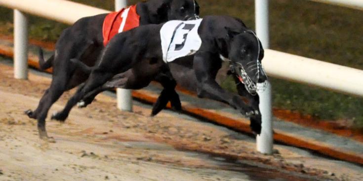 BoyleSportsIrish Greyhound Derby