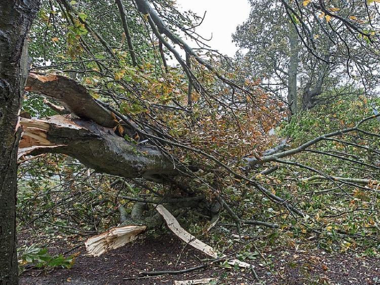 storm callum - photo #12