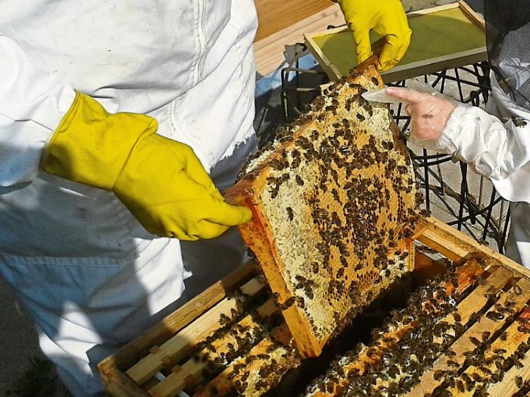 Tipperary beekeepers to get a buzz out of new beginners course tipperary star - Beekeeping beginners small business ...
